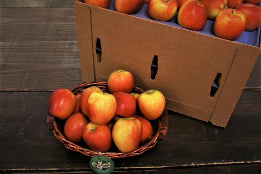 when are apples in season?